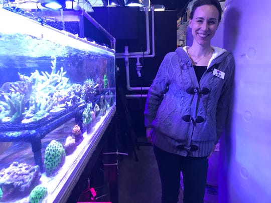 Organizers with the Butterfly House and Aquarium in Sioux Falls are midway through a $7.5 million fundraising campaign to grow their space. CEO Audrey Willard poses for a portrait in a corridor in the back of the aquarium where the tanks' life support systems take up much of the space.
