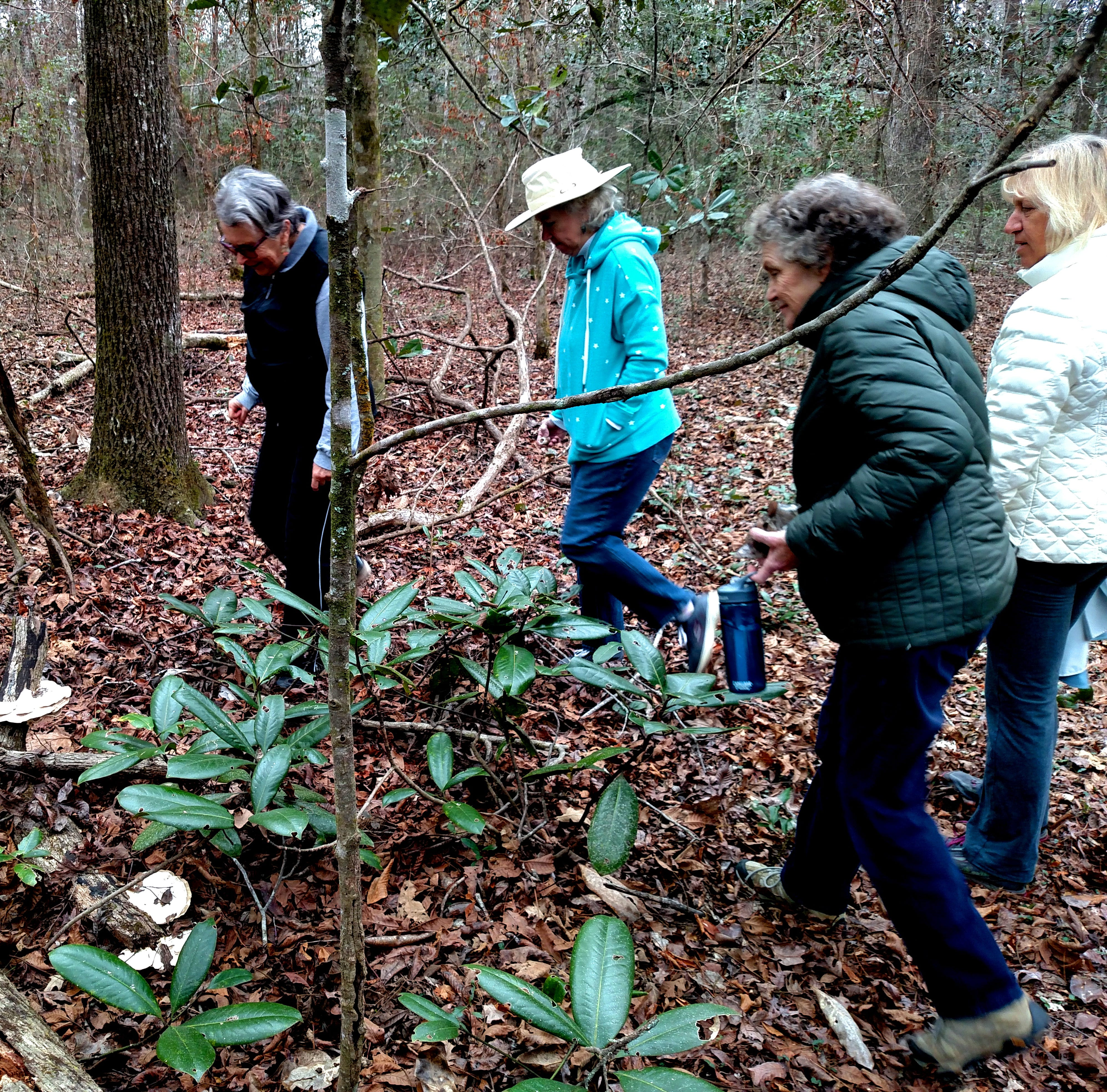 Forest treasures abound amid old growth at Thomasville's Lost Creek