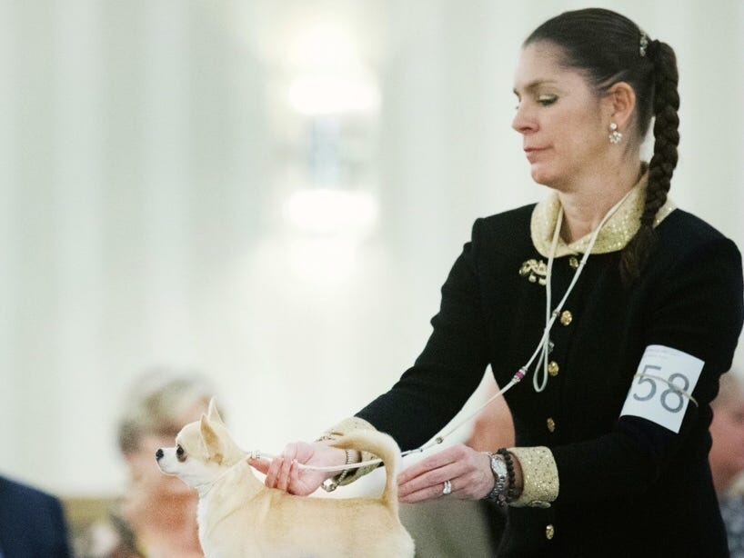 Owner-handler Cecilia Bozzo of Wilmington with her smooth-coat Chihuahua named Tiffany.
