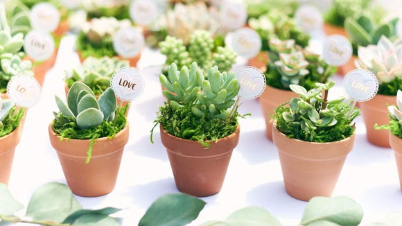 This succulent sale is perfect for DIY Valentine's Day gifts.