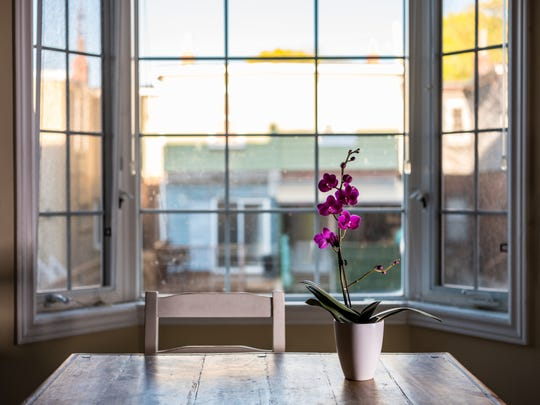 Some orchids thrive in the morning light and others need the hot afternoon sun, says Beth Davis of Waldor Orchids in Linwood.