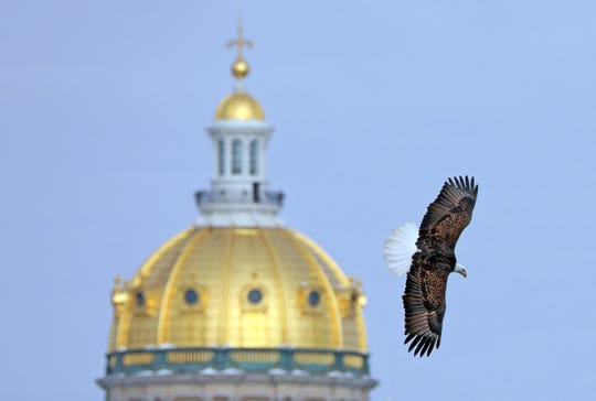 A bald eagle scans the river below with the state Capitol in the background Saturday, Feb. 9, 2019, during Bald Eagle Day hosted by Des Moines Parks and Recreation. Visitors could watch eagles hunt for fish in the Des Moines River from viewing stations on the Southeast Sixth Street bridge.