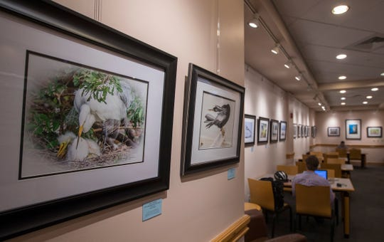 Thanks to the efforts of the Friends of the Cape Coral library and current president and art gallery chair Monica Rahman, the walls of the library will once again be adorned with an eclectic mix of art every month throughout the year.