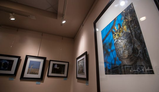 """An art exhibit entitled """"Birds of Different Feathers""""  four photographers who call themselves the French Connection is currently on the display at the Cape Coral Library."""