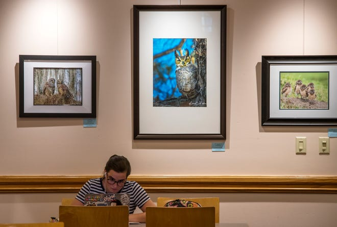 """Gabrielle Kesecker, of Cape Coral, works on her art portfolio at the Cape Coral Library on Monday morning.  An art exhibit entitled """"Birds of Different Feathers""""  four photographers who call themselves the French Connection is currently on the display at the library."""