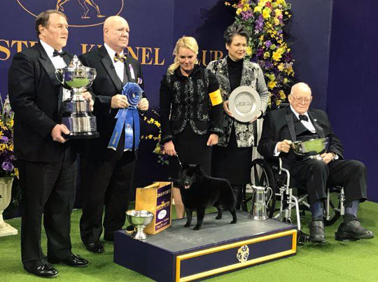 Colton, a schipperke, won best in the nonsporting category at Westminster Dog Show. Colton and his owners are from Howell.