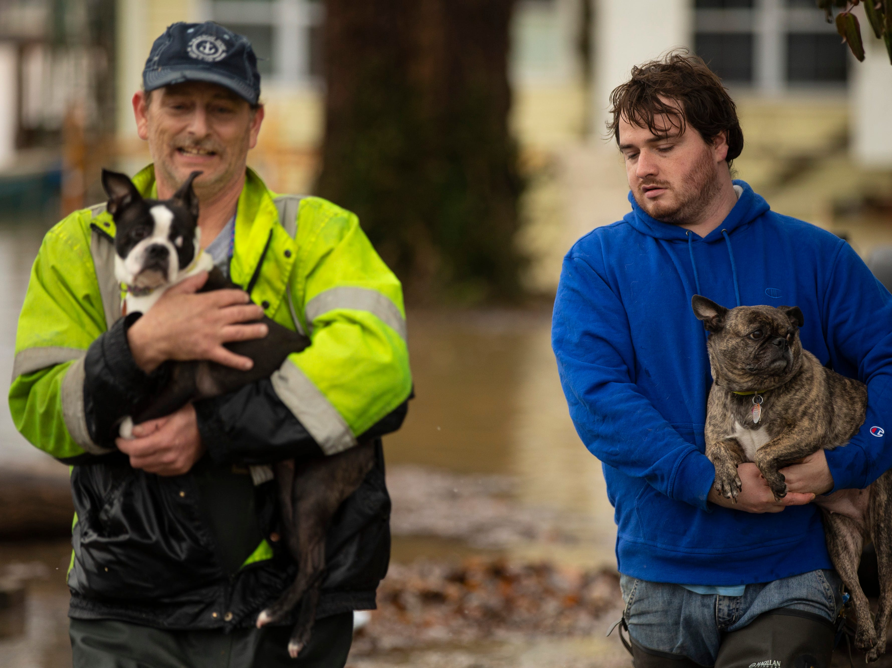 """Allen Alt, left, carries Bella as his son Josh Alt carries Bugsy out of the family's home on River Road as high waters on the Ohio River rose Tuesday. """"We've lived here 35 years,"""" Alt said. """"We've just got about everything out."""" Feb. 12, 2019"""