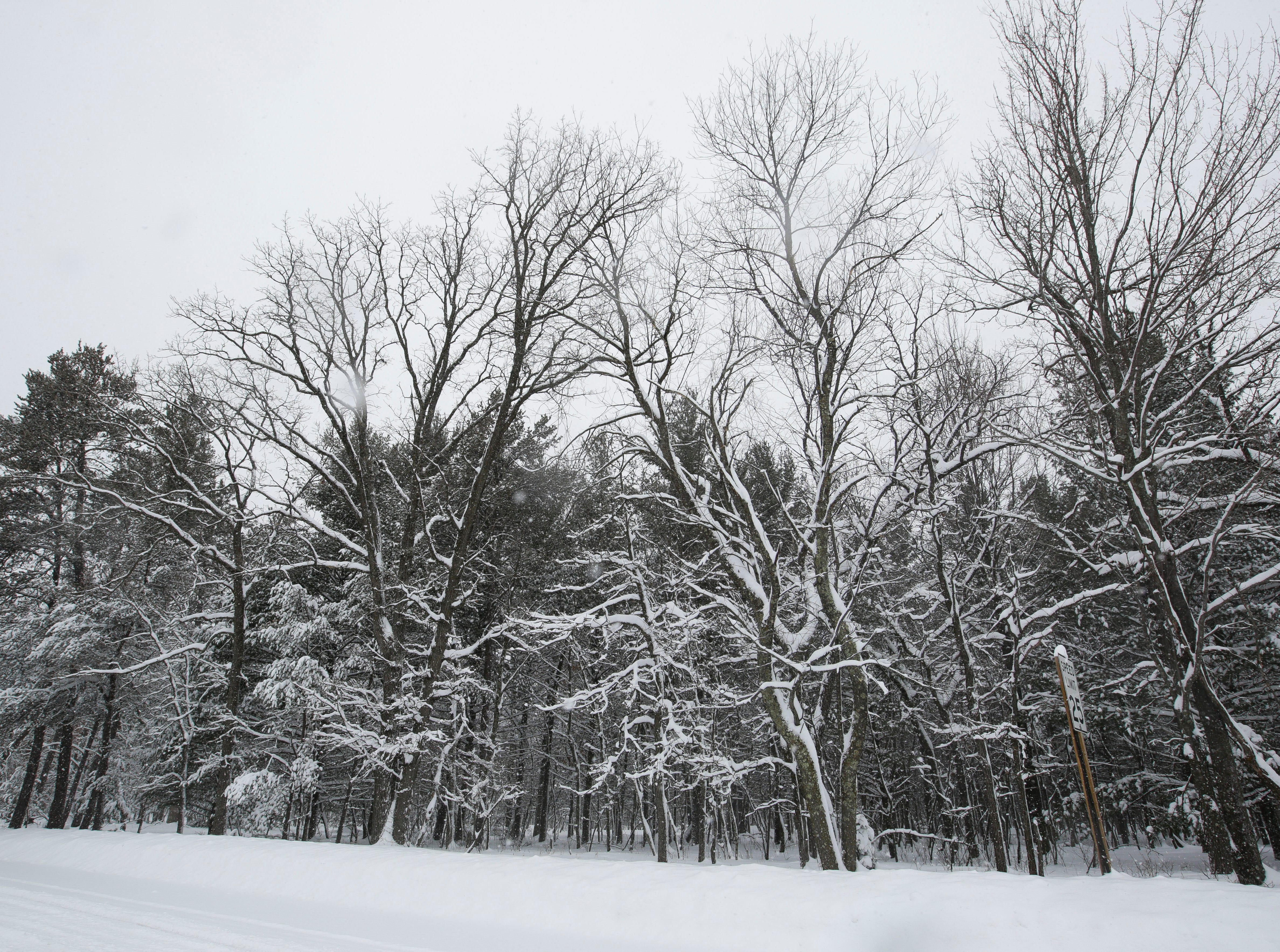 Snow gathers on trees along Golla Road on Tuesday, February 12, 2019, in Stevens Point, Wis. A winter storm is expected to drop 8-11 inches of snow in central Wisconsin before clearing Tuesday night.