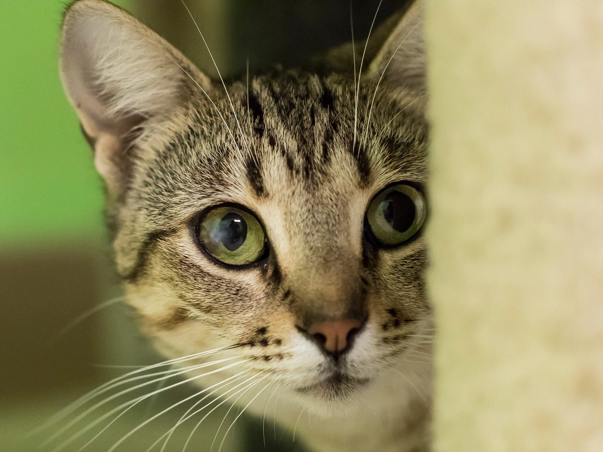Bambi Sue is a little skittish with strangers. The 1-year-old likes her space.