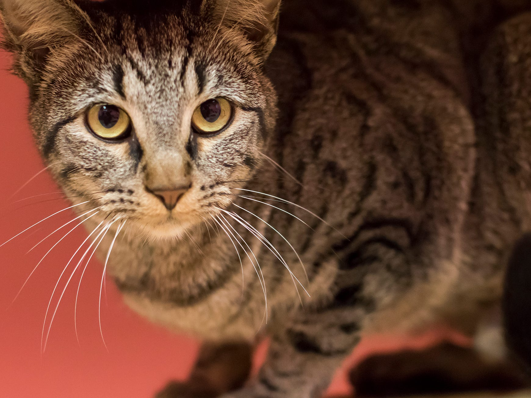 Fiona is a sweet, young cat who likes investigating.