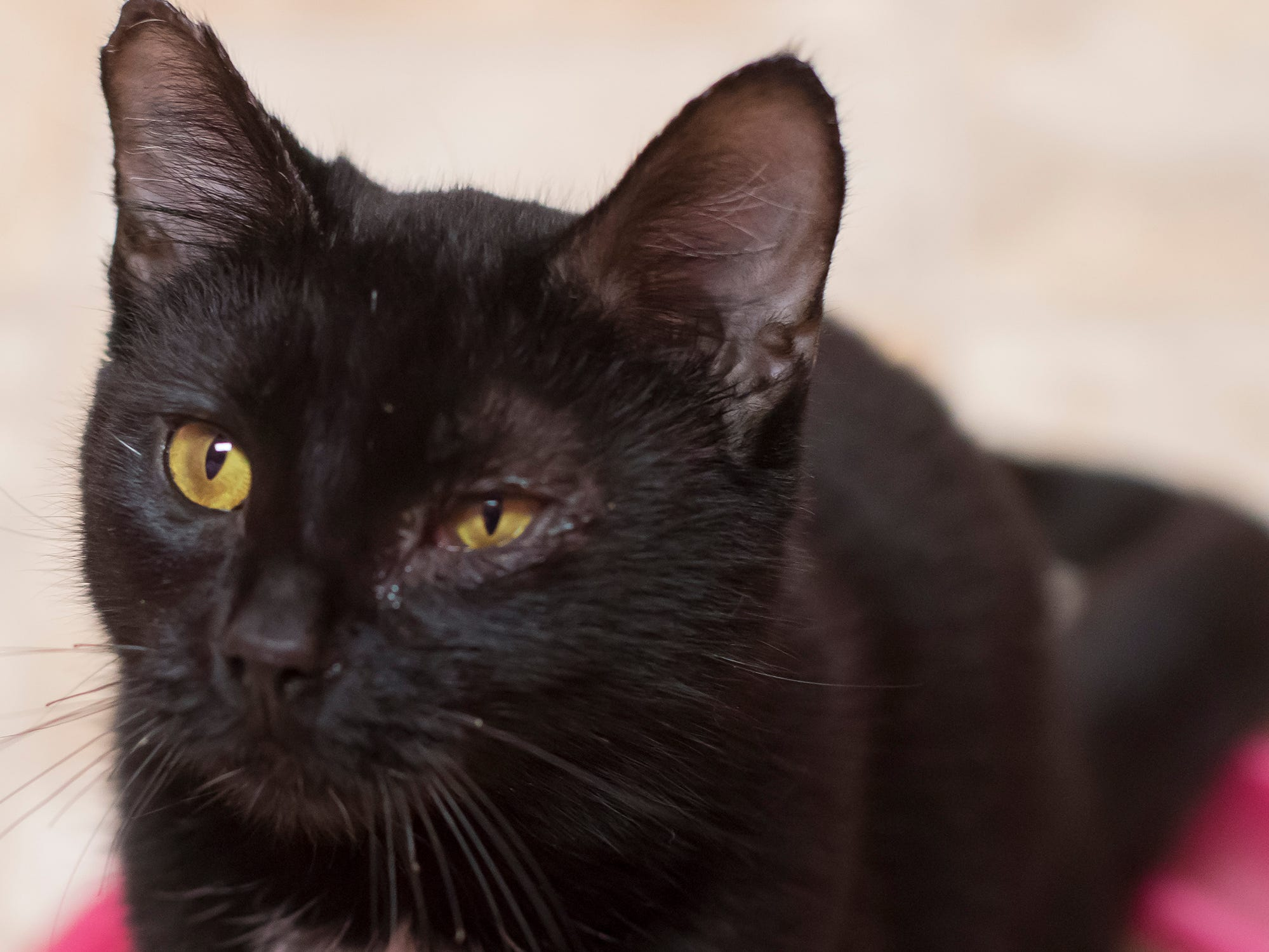 Knox is very friendly and loves meeting new people. The year-old survived a house fire, and the edges of her ears have some scarring, but she cuddles right up to newcomers.