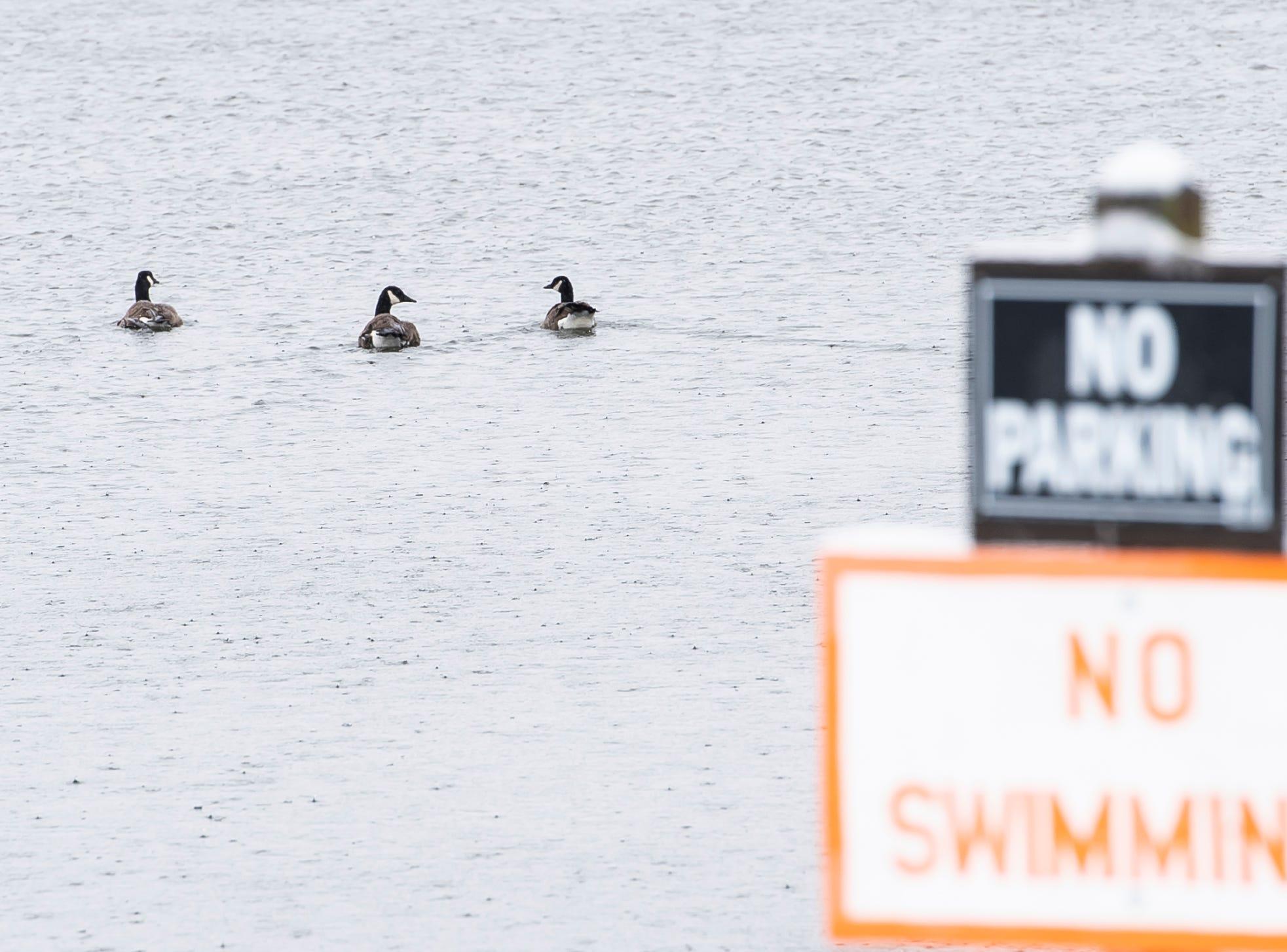 Ducks swim in Longarm Arm Reservoir Tuesday, February 12, 2019.