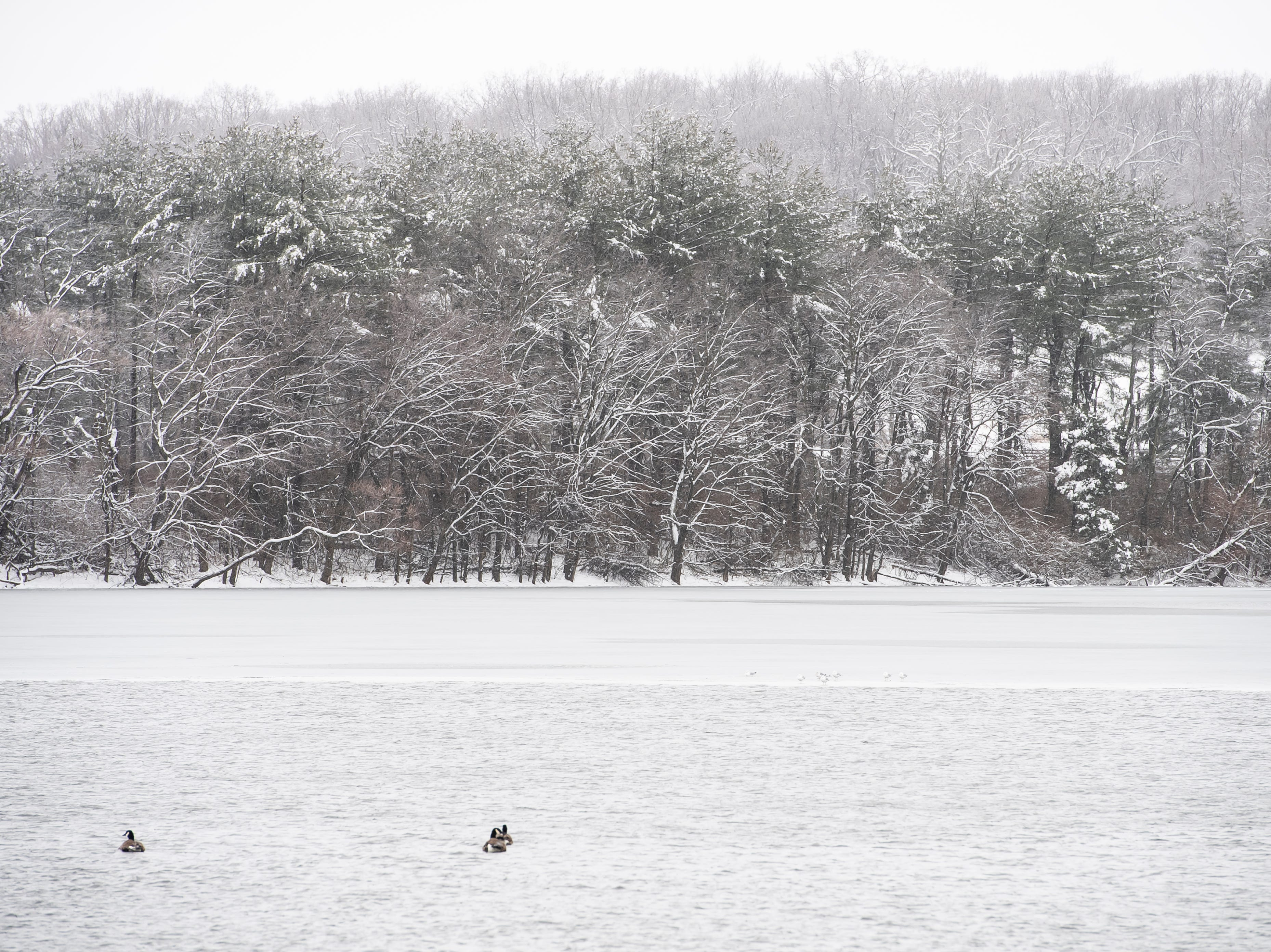A thin layer of ice covers part of Longarm Dam Reservoir in West Manheim Township Tuesday, February 12, 2019.