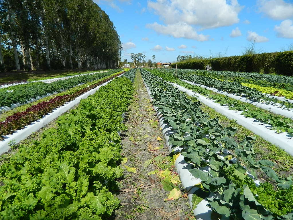 Kai Kai Farm, a 40-acre vegetable farm in Indiantown, began growing fresh produce in 2003 and now cultivates around 80 varieties of edibles.