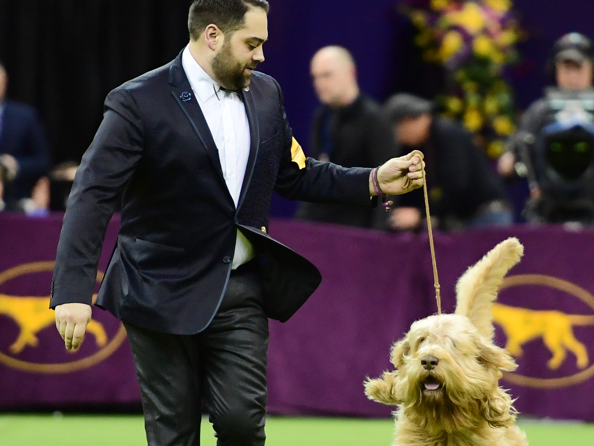 The Otterhound and trainer during the Hound Group judging at the 143rd Westminster Kennel Club Dog Show.