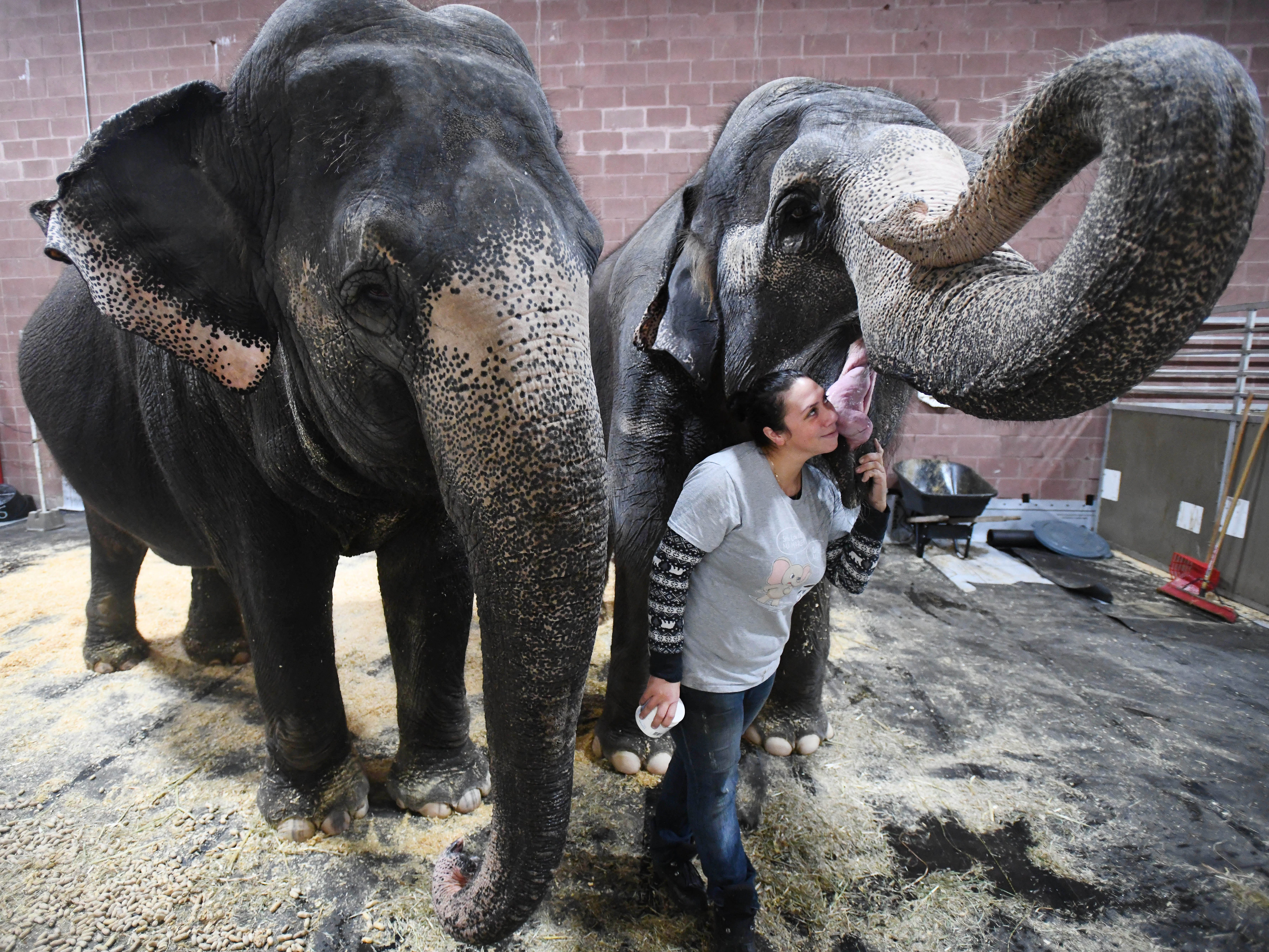 Shrine Circus trainer Jennifer Welde cuddles with Asian elephants Shelly and Marie whom the circus has had since they were babies. The Shrine Circus rolls into Novi, Michigan weekend performances at the Suburban Collection Showcase.