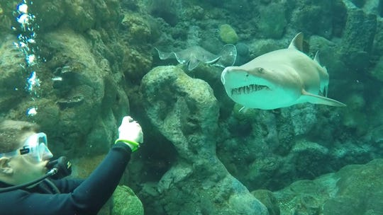 Melanie Altizer dives off the Florida coast in search of sharks, one of her favorite hobbies.