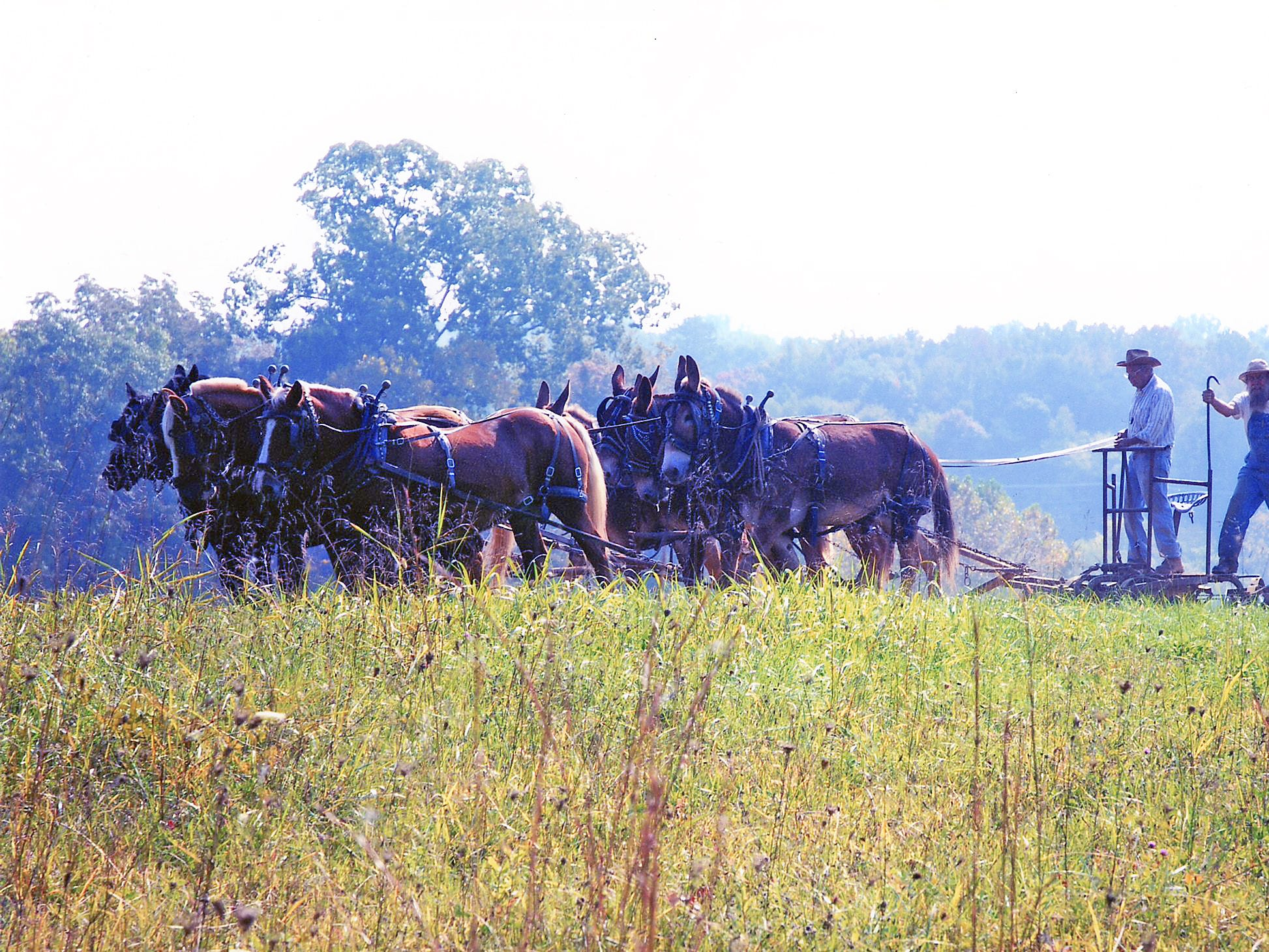 "This photo was taken off Murphy Road in 2006 when two gentlemen were plowing a field using a horse-drawn plow. It was featured on the cover of a North/East Shopper News and was titled ""The Simple Life""."