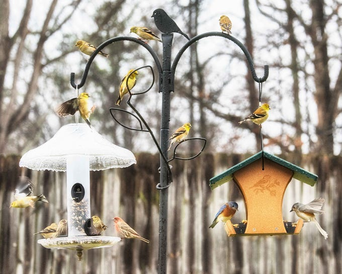 Robert Bilsky photographed birds at his bird feeder on a rainy day near Fountain City in January 2019.