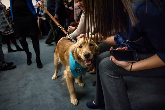 People pet newly sworn-in courtroom support dog Kory, a golden retriever, at the Veteran's Memorial Courthouse on Wednesday, Feb. 13, 2019, in Lansing.