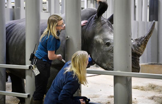 Melinda Kommavongsa gives T.C. a scratch with a brush, allowing Heather Robertson to do a close-up inspection.