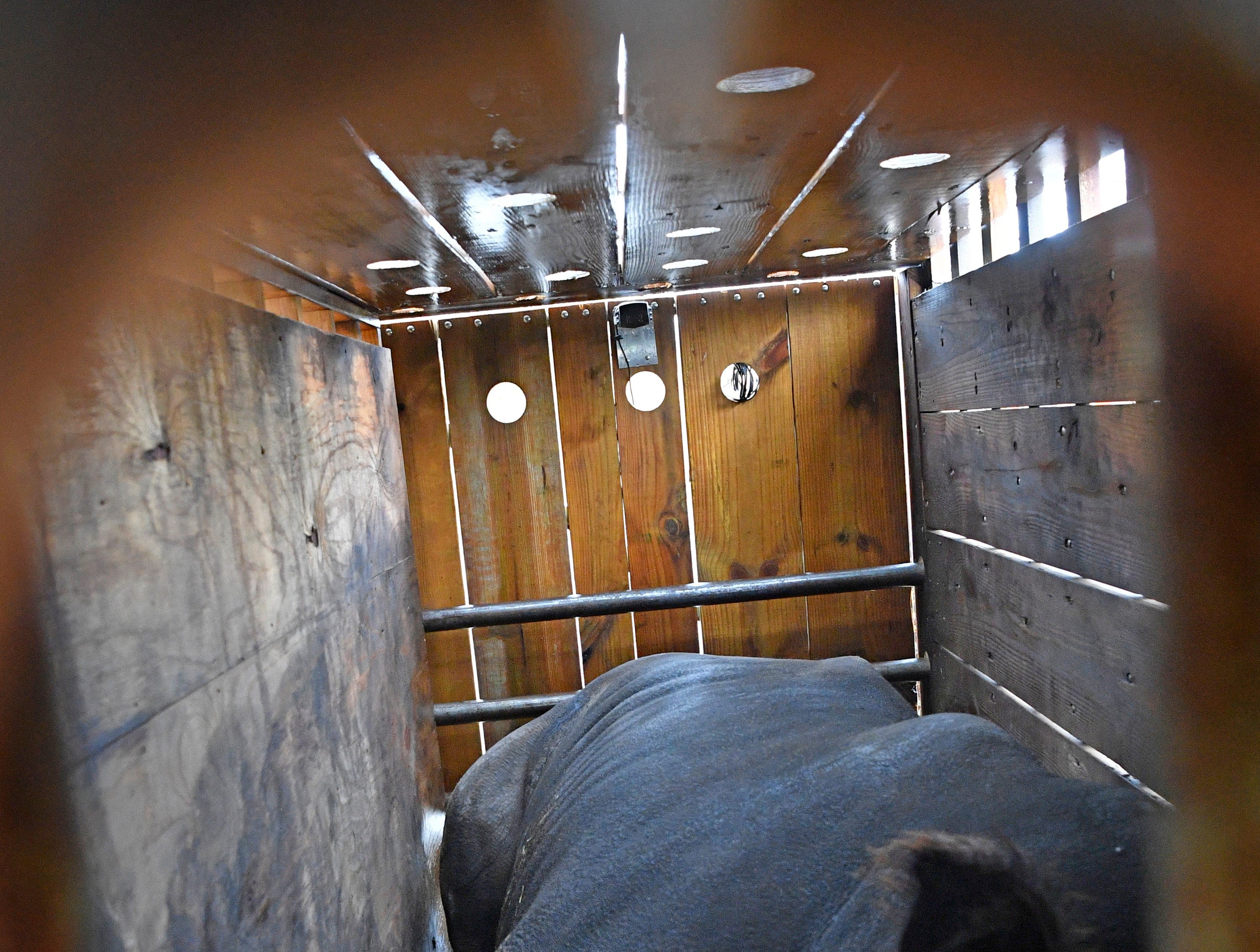 Looking thru an observation hole in a transportation crate a male White Rhino is still sedated after a long ride from Florida to join with four female rhinos already at the Nashville Zoo Saturday Dec. 1, 2018, in Nashville, Tenn.