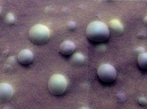 This image taken on Feb. 12, 2004 shows close-up of round, blueberry-shaped formations in the martian soil near a part of the rock outcrop at Meridiani Planum.
