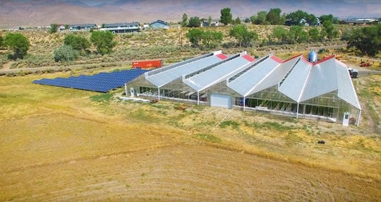 The main operations of Dayton Valley Aquaponics are housed in a 31,000-square-foot greenhouse powered by recycled wood pellets and solar panels.