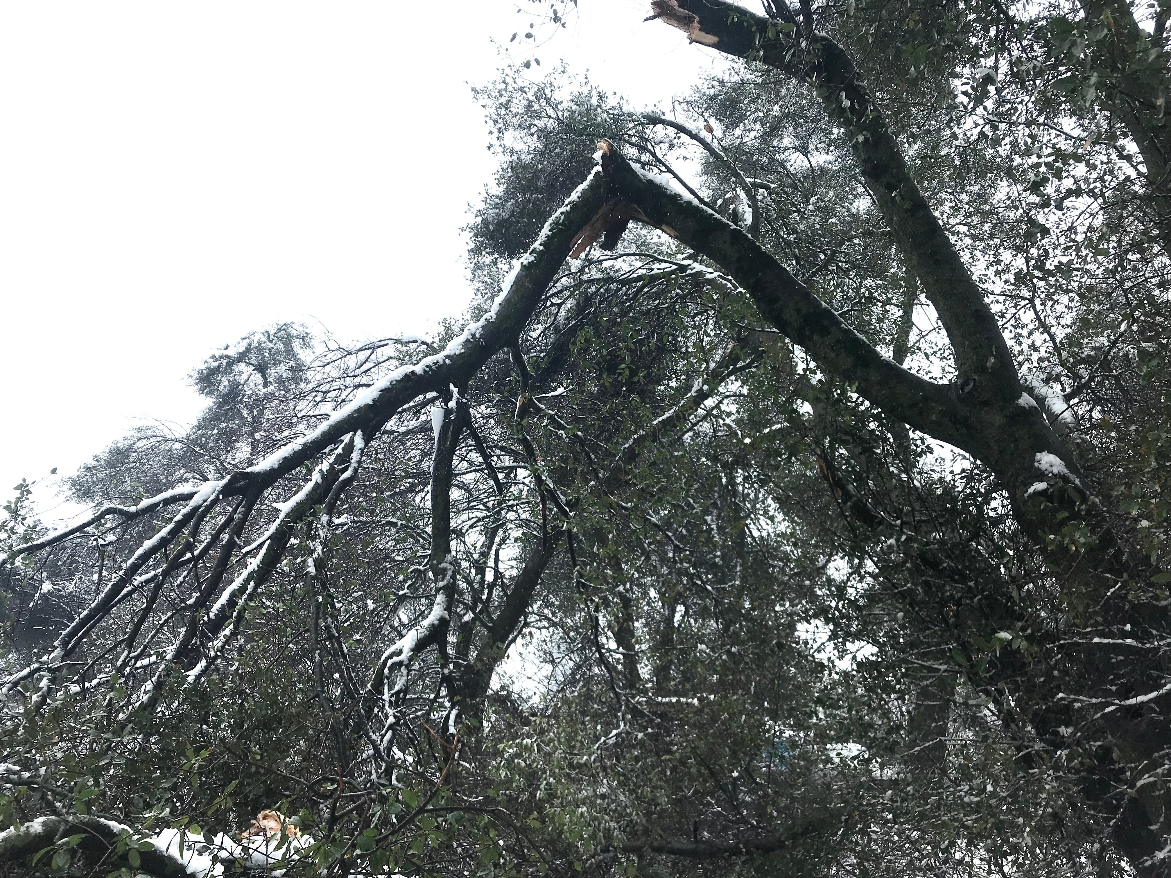 Hundreds of trees suffered broken branches across the North State during the snow storm.