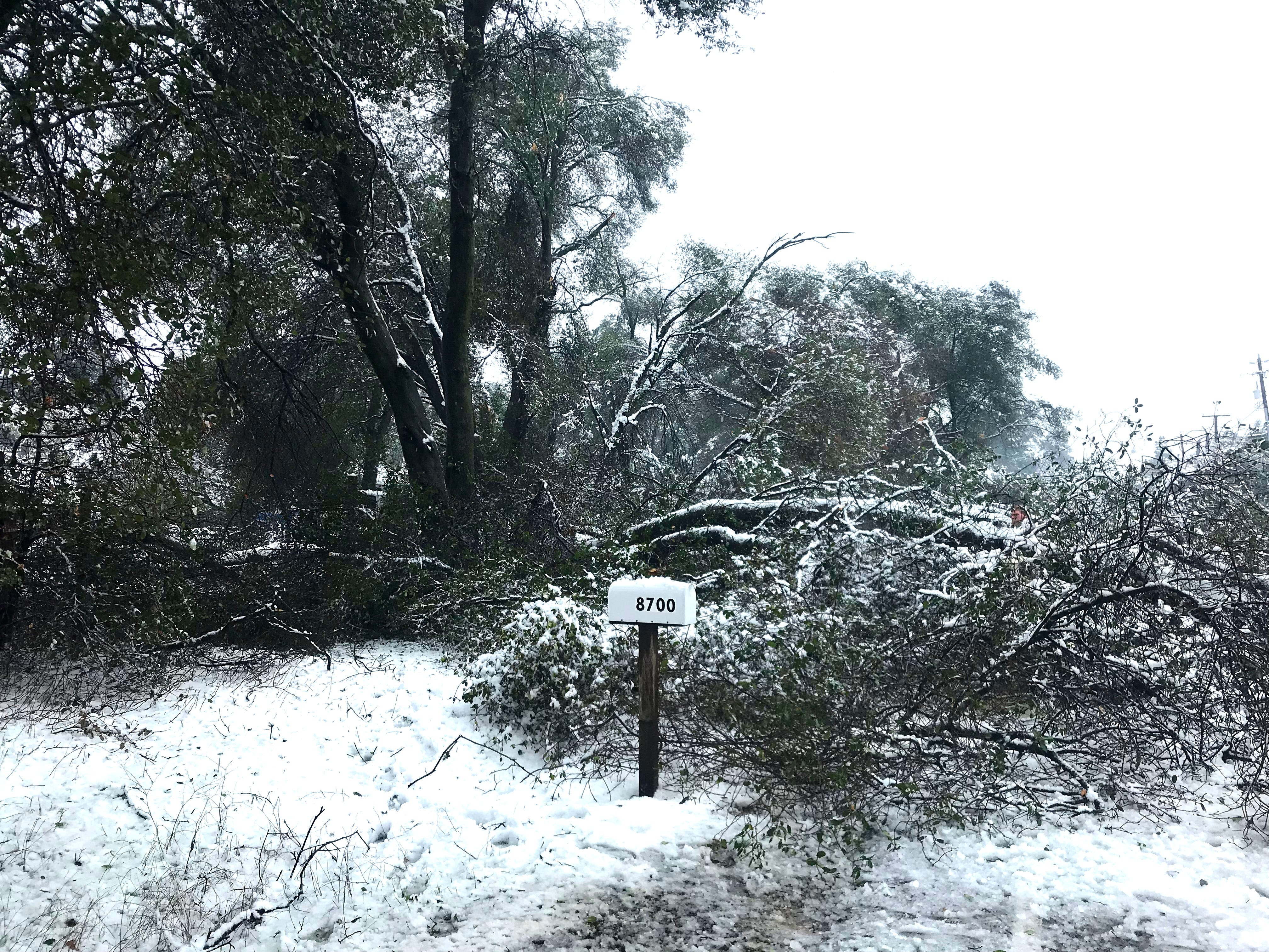 Broken branches were common across the North State on Wednesday.