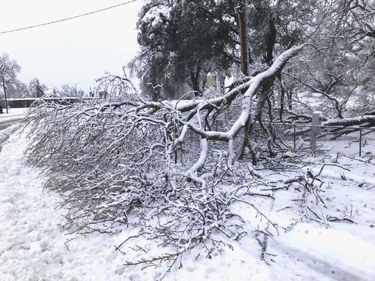 Snow brought down a large tree branch Feb. 13, 2019, on Park Marina Drive in Redding. The tree also took down power lines.
