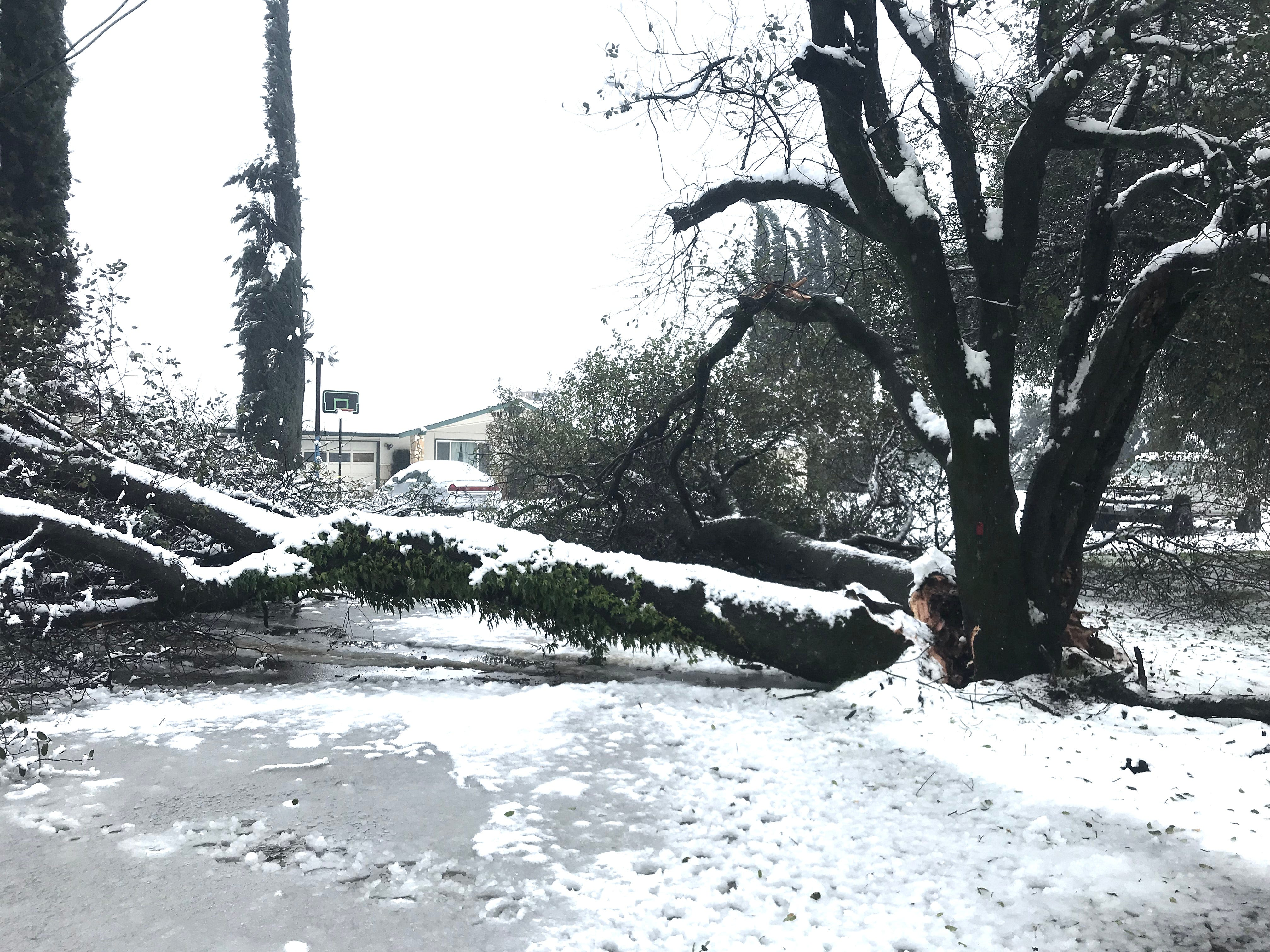 Trees were broken all over Redding as 10 to 13 inches of snow fell in Redding overnight Tuesday.