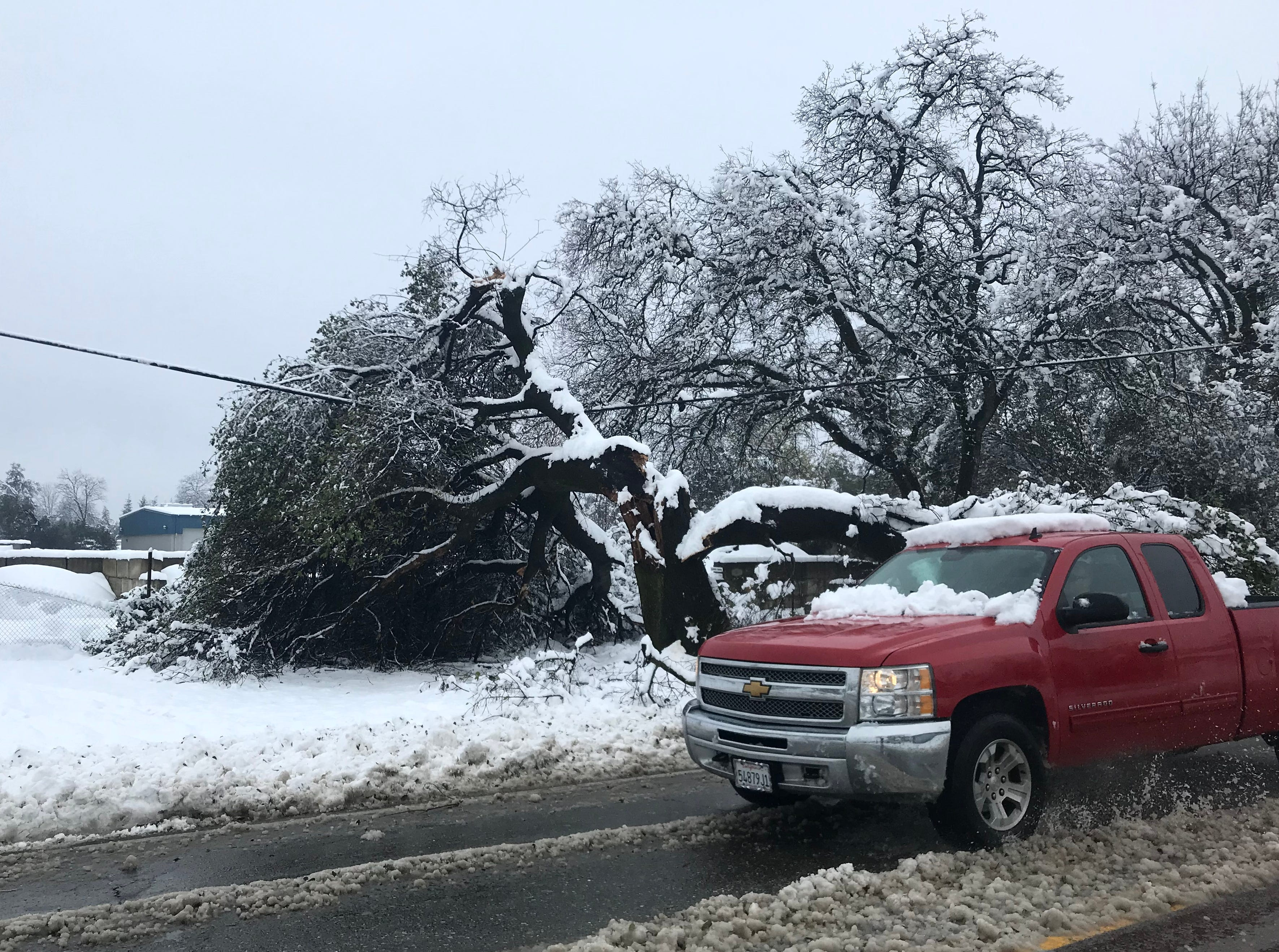 A tree that snapped in two along Airport Road south of Redding hangs precariously on a power line on Wednesday.