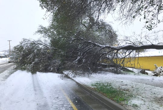 A large, fallen tree branch partially blocks S. Market Street near Lulu's restaurant in downtown Redding on Wednesday morning.