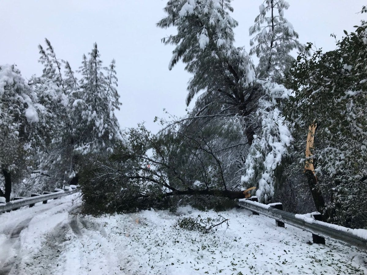 Trees were down all over Redding - including this one across Twin View Boulevard - on Wednesday morning after 13 inches of snow hit Redding.