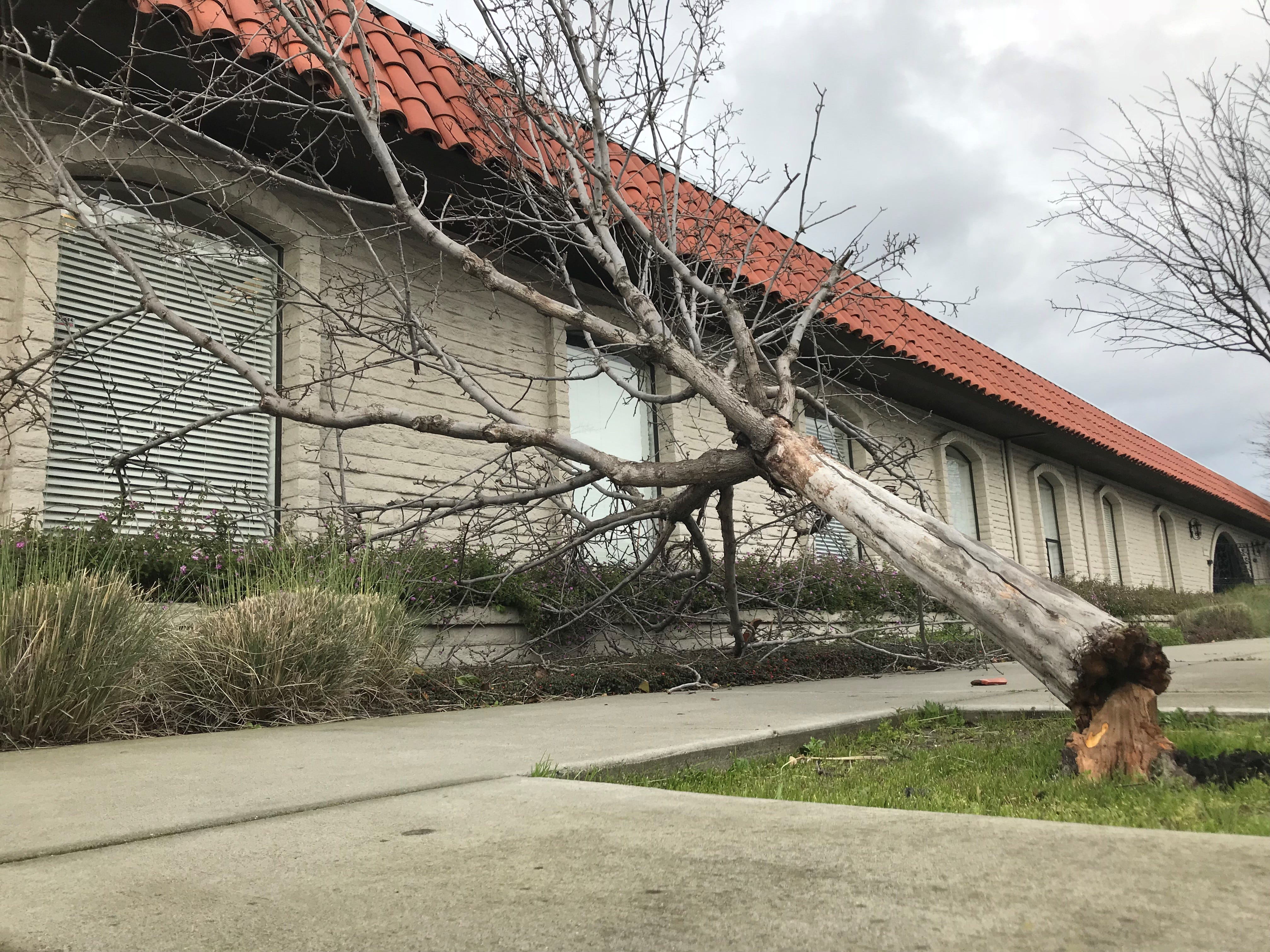 A tree knocked over by heavy winds near West Gabilan and Church streets Feb. 13, 2019.