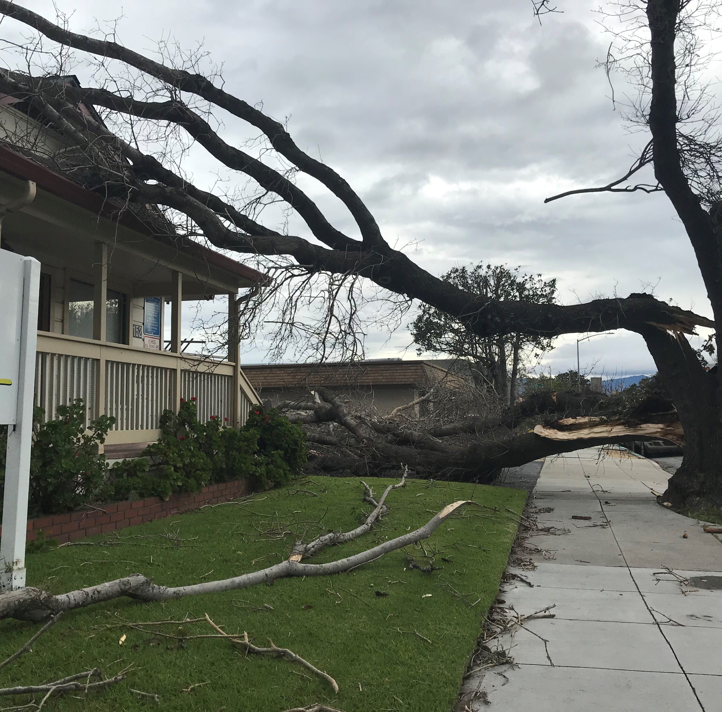 Live updates: Strong winds knock down trees and poles, cause power outages in Salinas