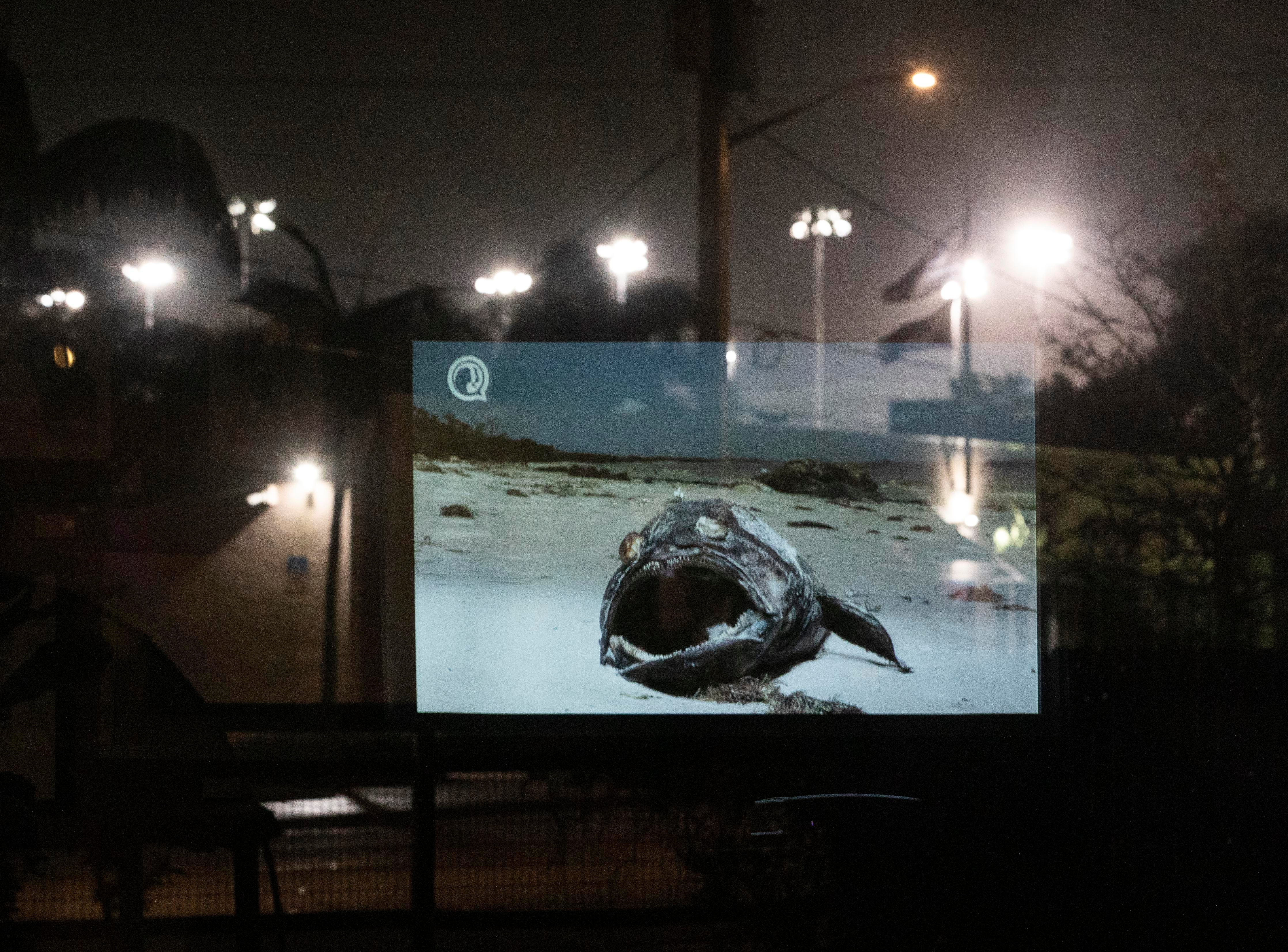 """A scene from the 24-minute film, """"A State in Transition,"""" is reflected in a window at Ground Floor Farm during TCPalm's inaugural Documentary & Drinks event on Tuesday, Feb. 12, 2019, in Stuart. The film, which grew out of TCPalm's Florida Voices project was created by visuals journalist Leah Voss and opinion/audience engagement editor Eve Samples. The pair interviewed 22 Floridians from across the state about what's important to them during this important time in Florida's history. Environmental concerns were a persistent topic."""