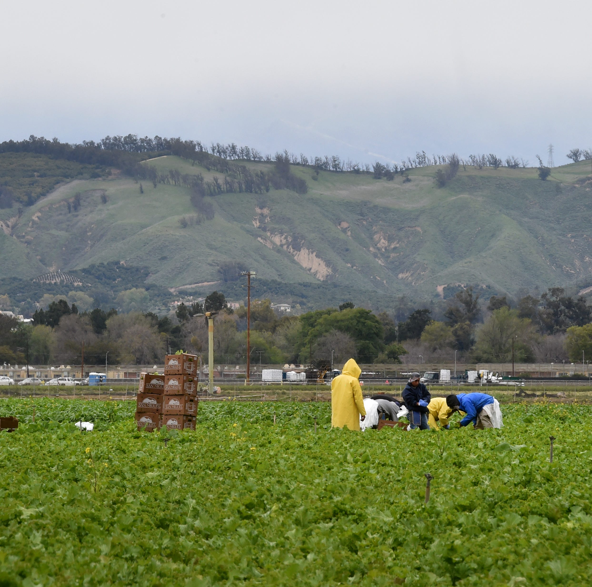 Storm rolls through Ventura County as farmers welcome steady rains