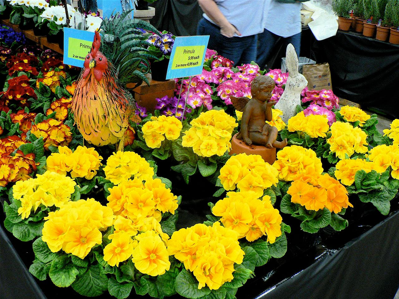 Yes, there were flowers at the Garden Expo. These came from America's Best Flowers at Cottage Grove.