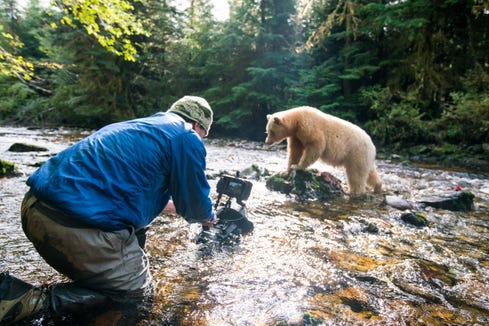 Director and cinematographer Ian McAllister sets up his camera to film an all-white spirit bear as it hunts for salmon in a stream in the Great Bear Rainforest.