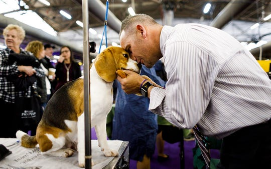 Aaron Wilkerson pets a dog at the New York Westminster Kennel Club Dog Show.