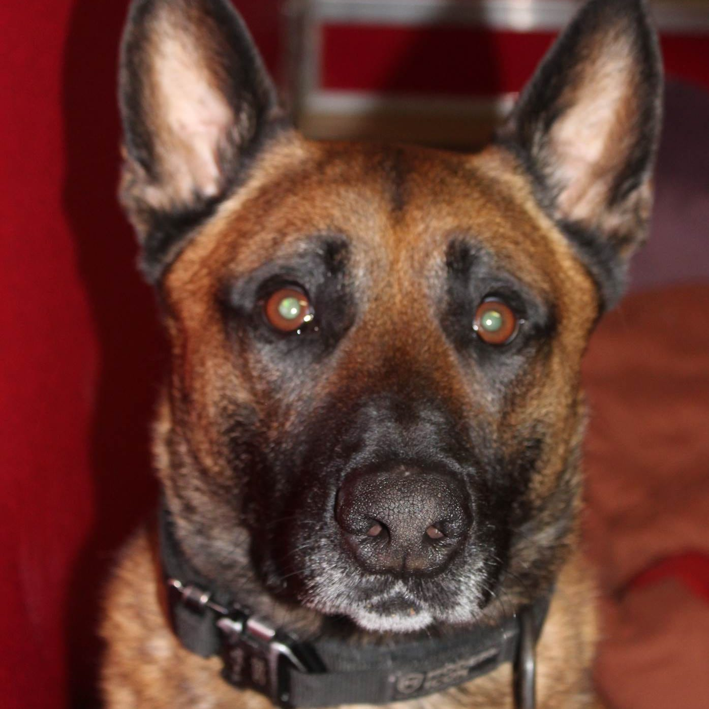Deputy had troubled history at previous job with dog injured in his care at sheriff's office
