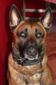 Magnum, a canine officer with the Anderson County Sheriff's Office, was recently injured during  training with his handler. The deputy who Magnum was assigned to is under investigation.
