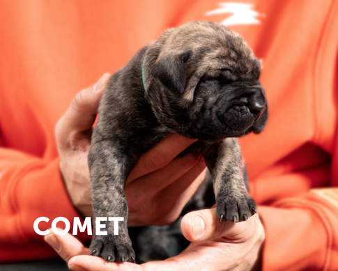 finest selection a8c0f 95162 You can adopt Odell Beckham Jr.'s puppies in Millstone