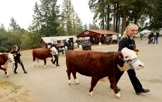 FFA members walk back to the barn after the livestock auction at the Kitsap County Fair & Stampede in August. The county is exploring transferring the fair to nonprofit management after a consultant studied the event's sustainability last year.