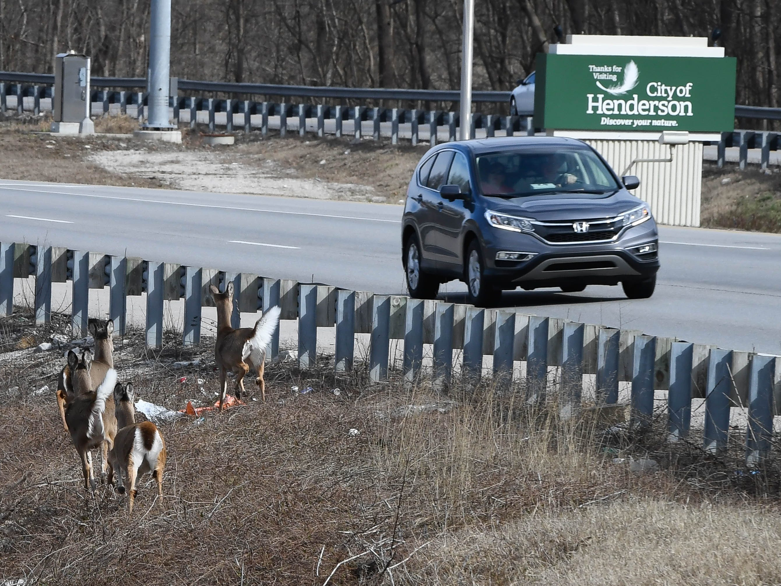 Deer looking to cross southbound U.S. 41 near the twin bridges as high water forces them out of their river-bottom habitat Thursday, February 14, 2019.