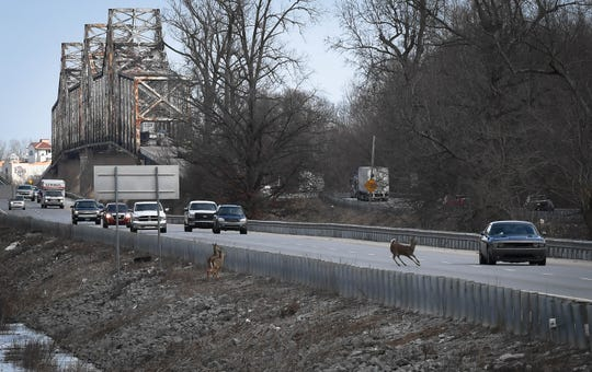 Deer crosses a busy southbound U.S. 41 near the twin bridges as high water forces them out of their river-bottom habitat Thursday, February 14, 2019.