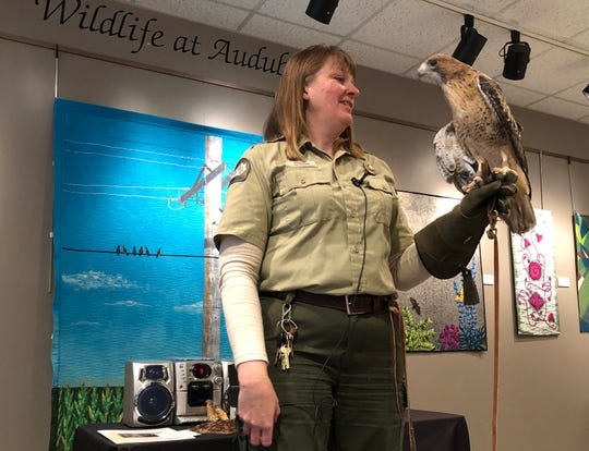 Lisa Hoffman, the programs service supervisor at John James Audubon State Park, displays a red-tailed hawk during the annual meeting of the Friends of Audubon recently. The hawk, which has a broken wing and can't fend for itself in the wild, is cared for by park employees and is used in numerous nature presentations for school and other groups.