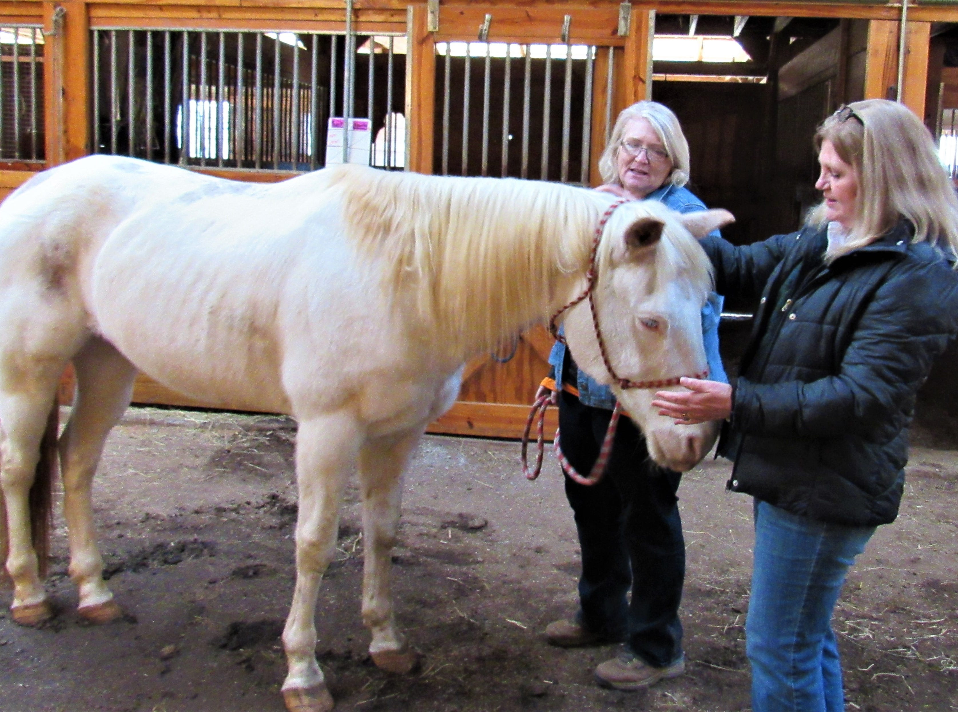 Equine manager Jocelyn Smith and executive director Tina McConnell check on Reign; he was seized by law enforcement during a raid. Because of throat scarring, he consumes only a liquid diet for now.